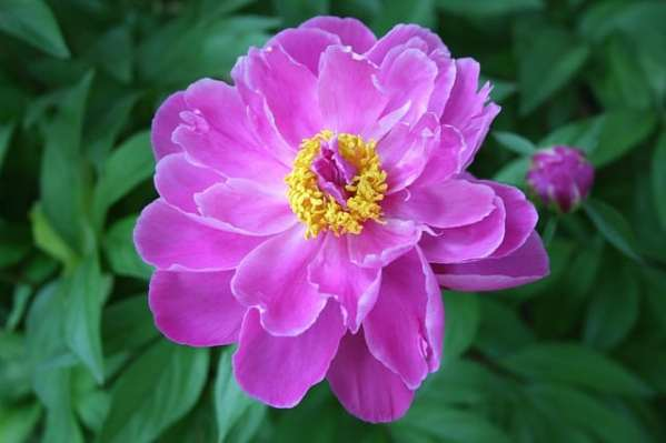 growing annuals and perennial flowers