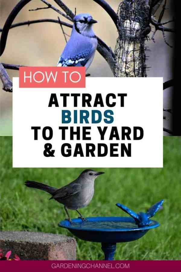 birds at birdfeeder and birdbath with text overlay how to attract birds to the yard and garden