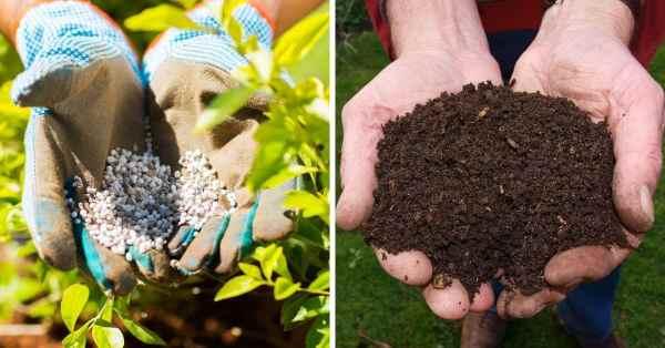 compost and garden fertilizer