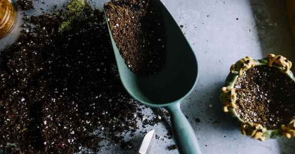 Vermiculite vs perlite in garden soil