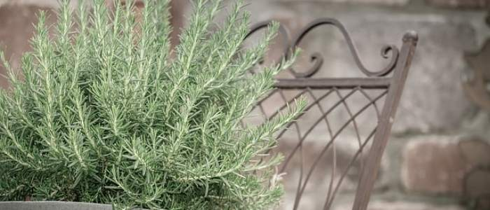 rosemary container