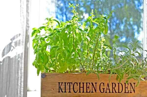 indoor herb kitchen window garden