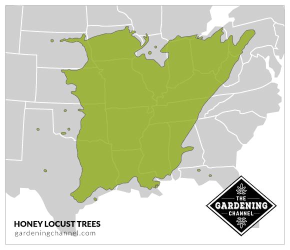 USA map honey locust trees
