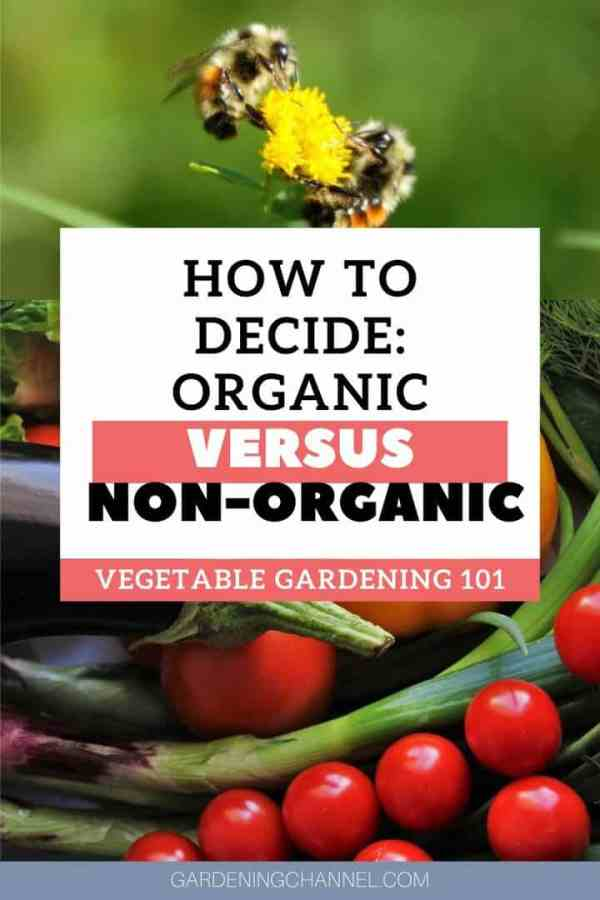bees pollination organic vegetables with text overlay how to decide organic versus nonorganic vegetable gardening 101