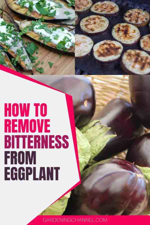 eggplant dishes with text overlay how to remove bitterness from eggplant