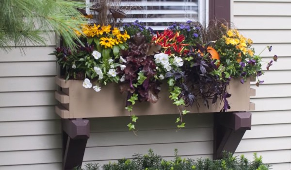 Window Box Planting Tips