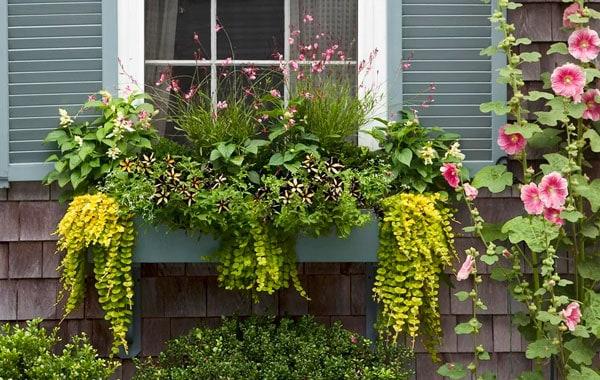 Window-Box Garden
