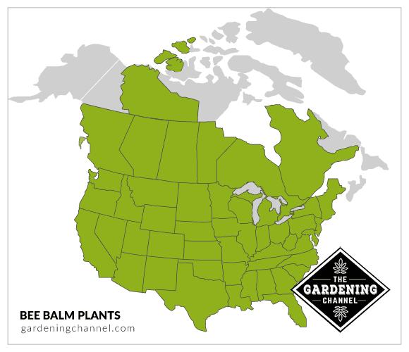 USA map bee balm plants