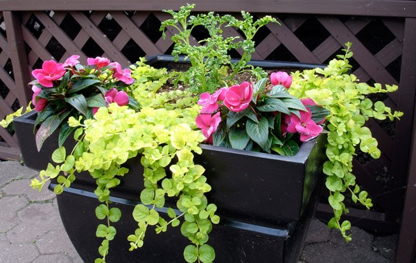 big containers with colorful plant