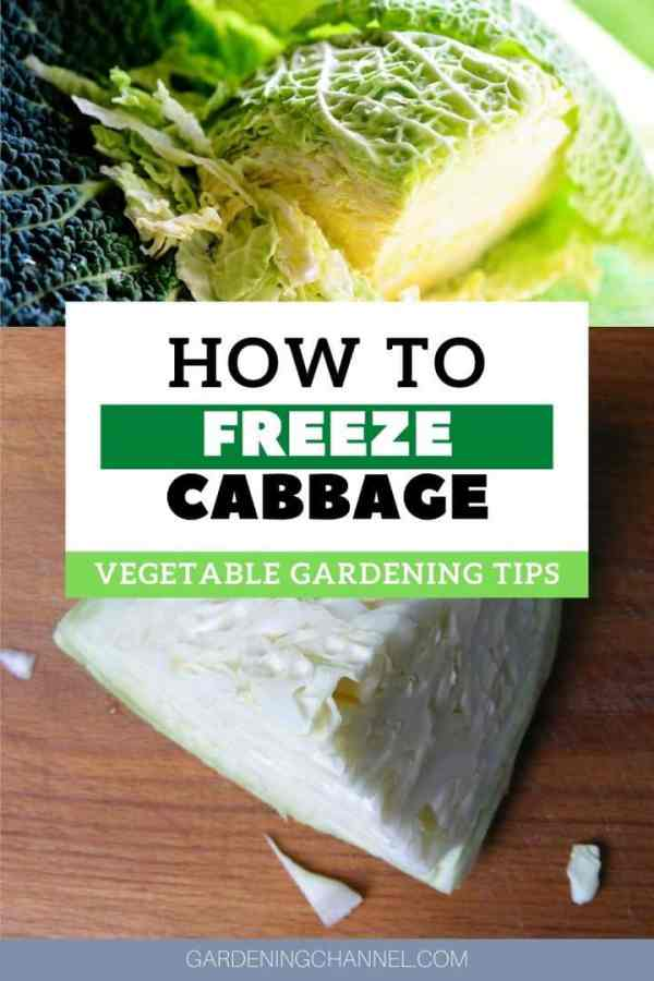 quarted cabbage with text overlay how to freeze cabbage vegetable gardening tips