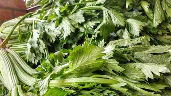using celery leaves