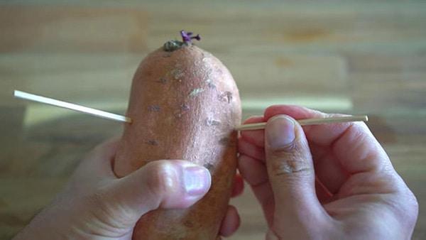 Stick toothpicks in potato