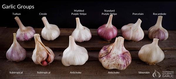 Garlic Groups for Garlic Lovers