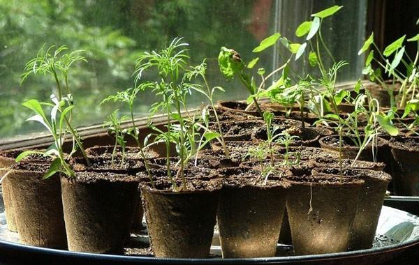 Harden Seedlings