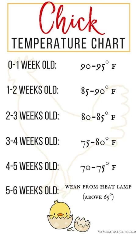 Chick temperature chart
