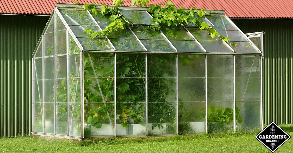 Growing plants using small greenhouse