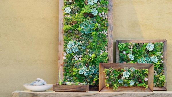 Easy DIY Succulent Wall Planters