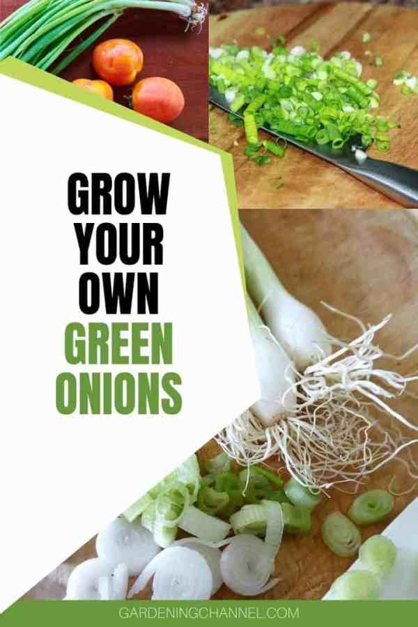 harvested and diced green onions with text overlay grow your own green onions