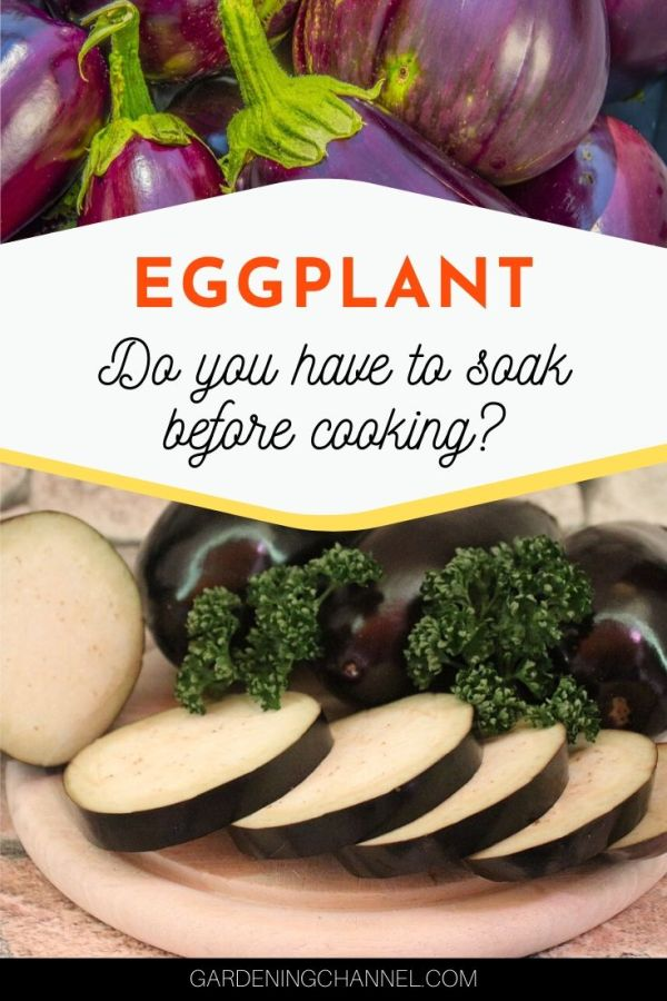 harvested eggplant and sliced eggplant with text overlay eggplant do you have to soak before cooking