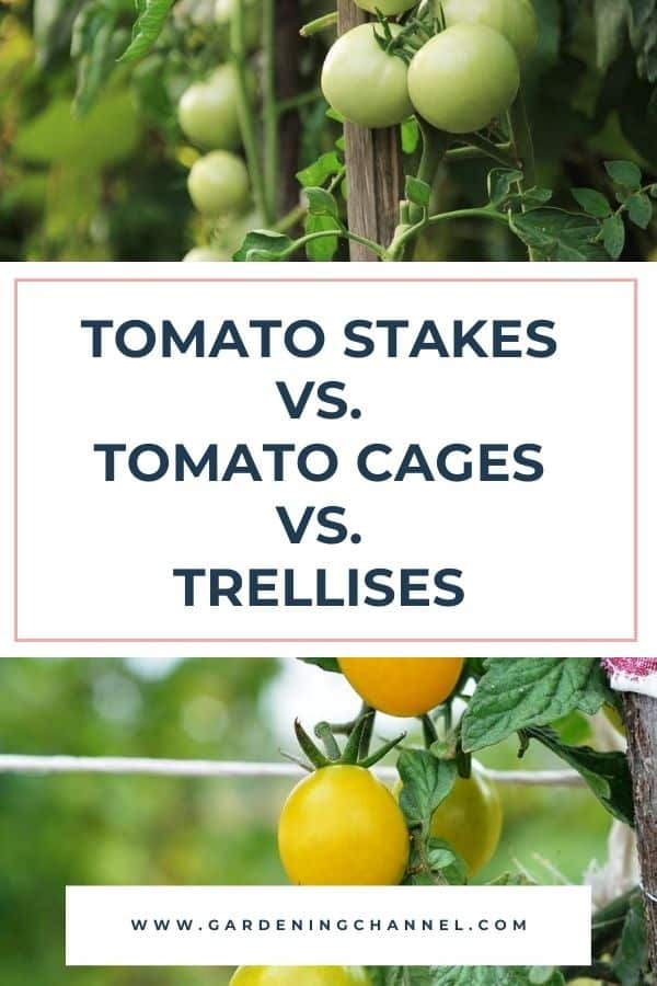 tomato cage and trellis with text overlay tomato stakes versus tomato cages versus trellises
