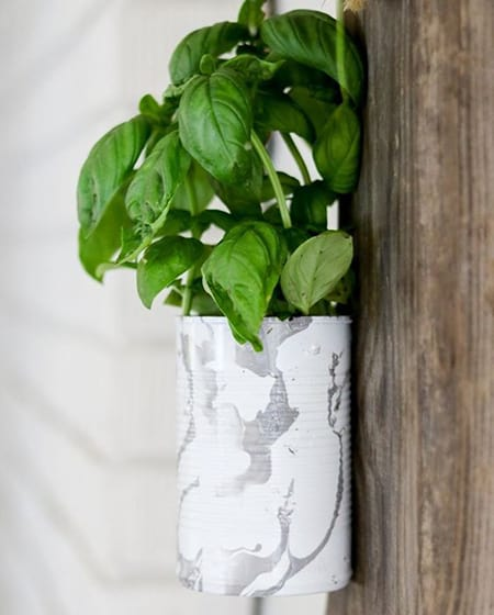 Basil in a wall planter