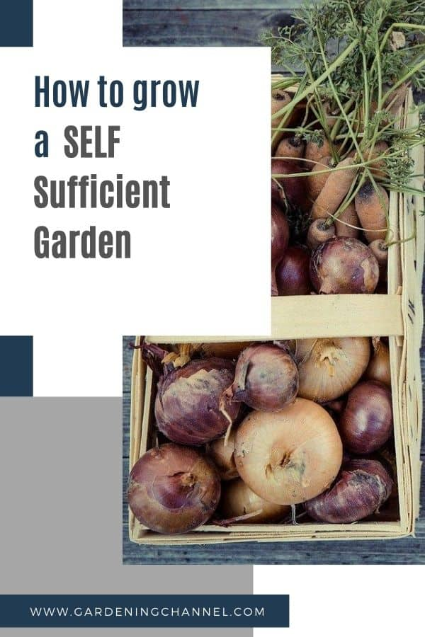 vegetable harvest with text overlay how to grow a self sufficient garden