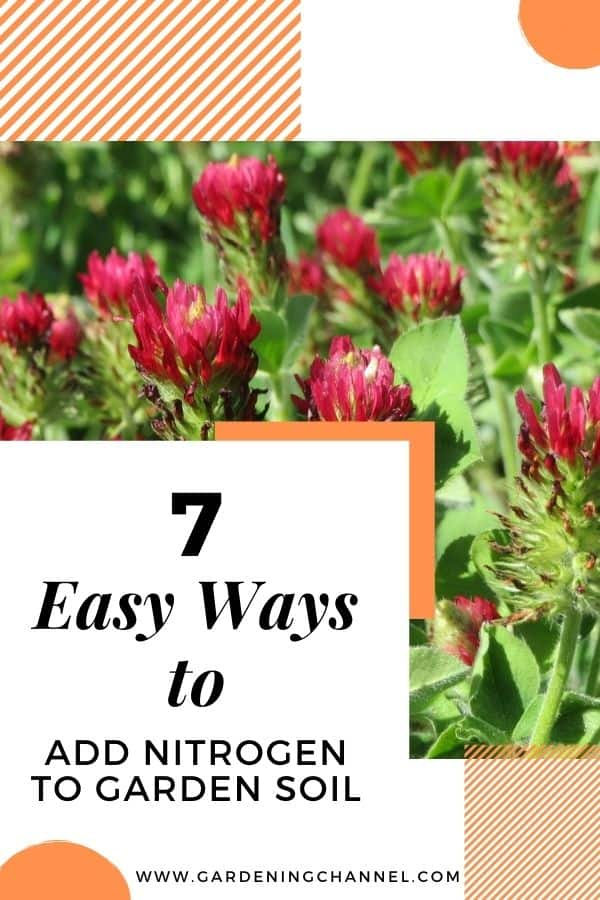 crimson clover with text overlay seven easy ways to add nitrogen to garden soil