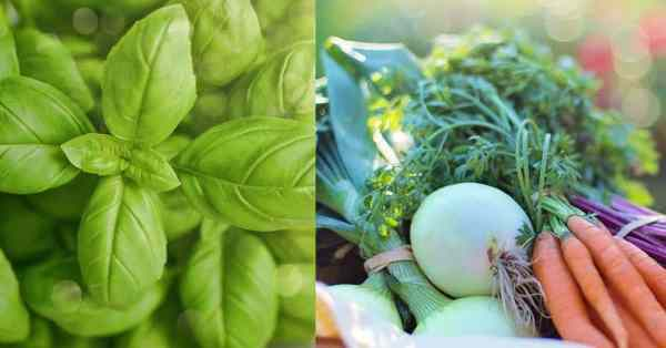 herbs vs vegetables