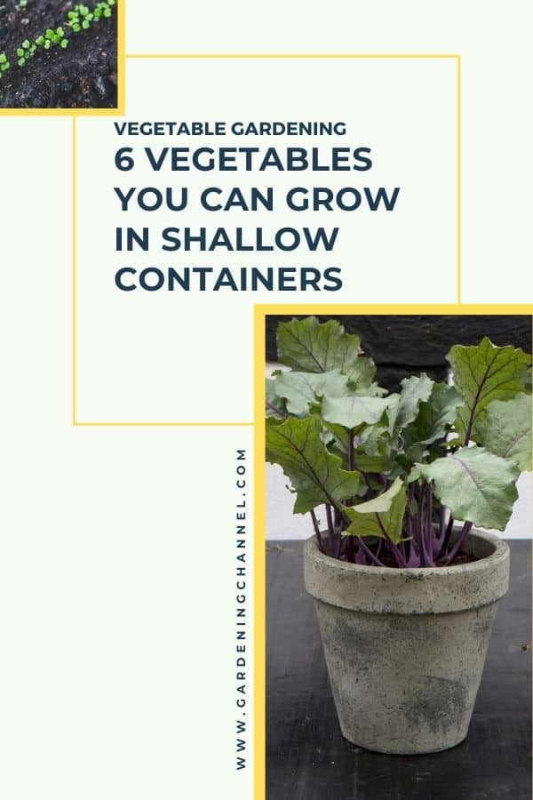 arugula kale with text overlay vegetable gardening 6 vegetables you can grow in shallow containers