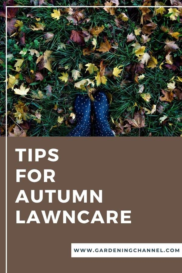 fall leaves in grass with text overlay tips for autumn lawncare