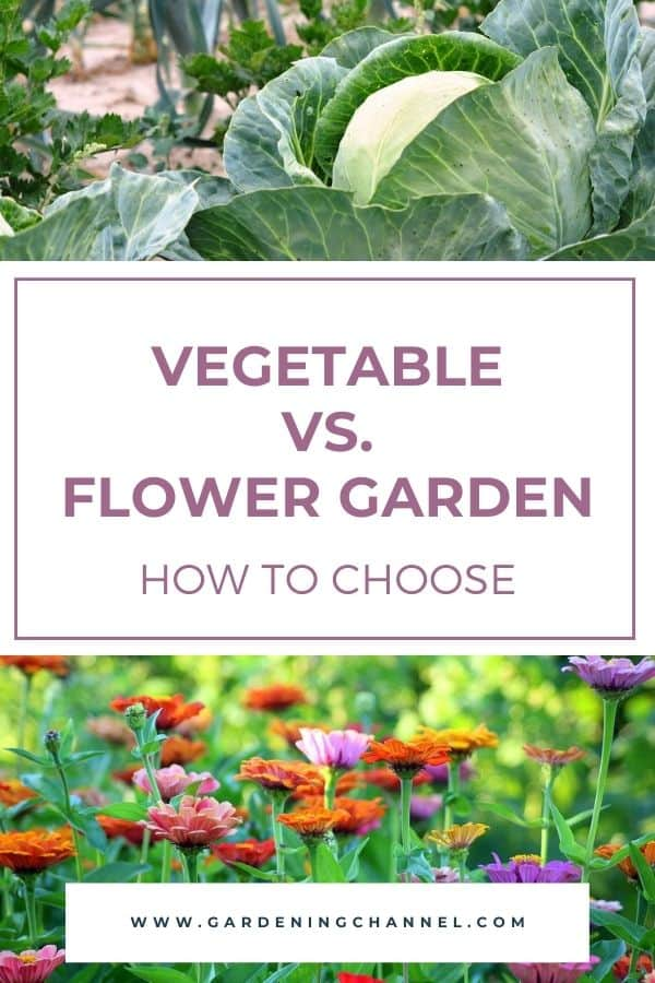 cabbage and zinnias in garden with text overlay vegetable versus flower garden how to choose