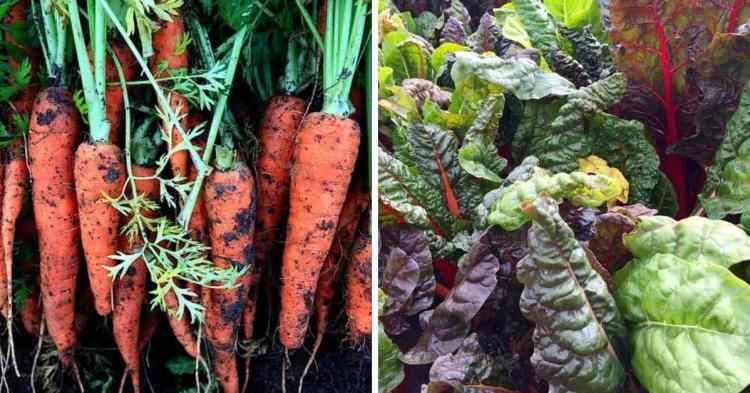 easy vegetables to grow in the home garden