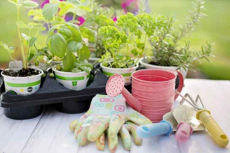 starter plants in pots