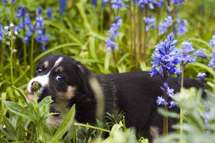 dog in a flower garden
