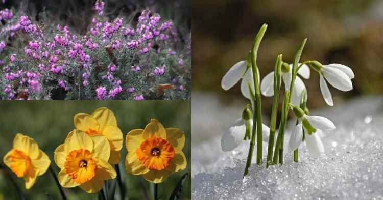 winter blooming flowers