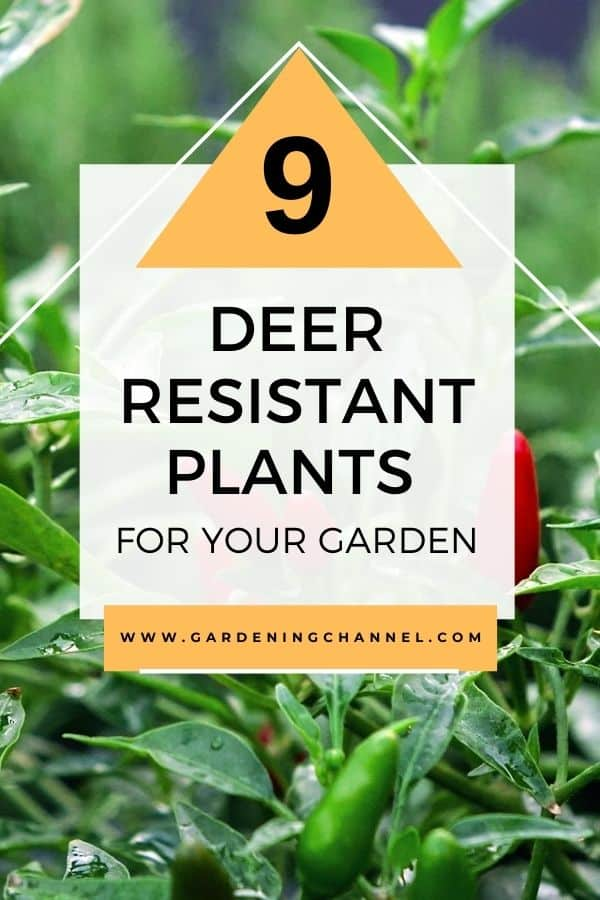 hot chili peppers with text overlay nine deer resistant plants for your garden