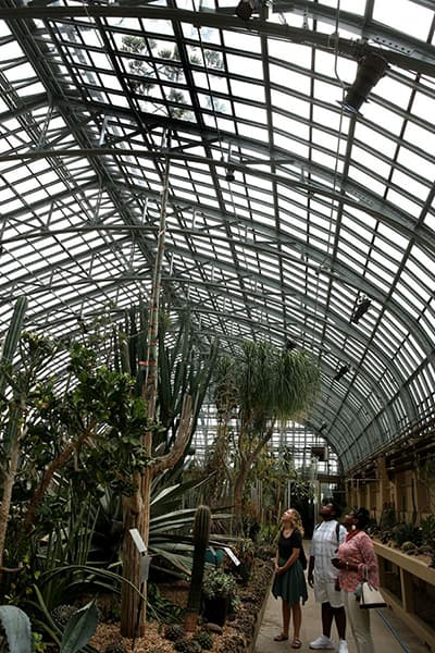 visitors looking at 38-foot tall century plant in Garfield Park Conservatory