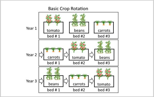 Basic Crop Rotation