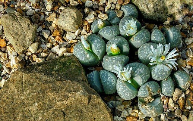 growing pebble stones