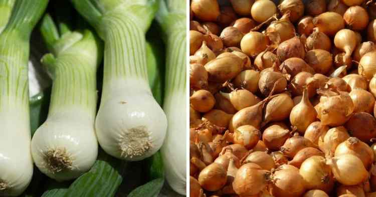 scallions and shallots differences explained