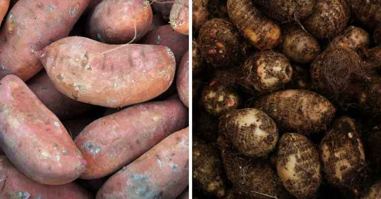 sweet potatoes compared to yams in a photo