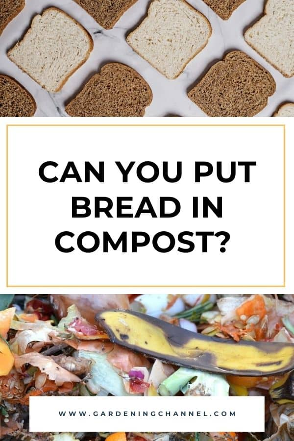 bread compost with text overlay can you put bread in compost