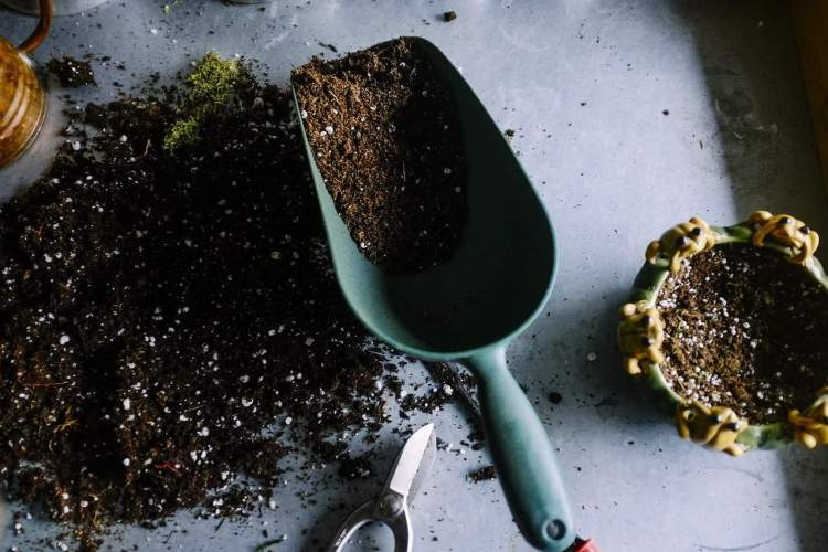 potting soil and scoop