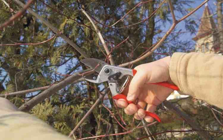 felco 31 pruner in action