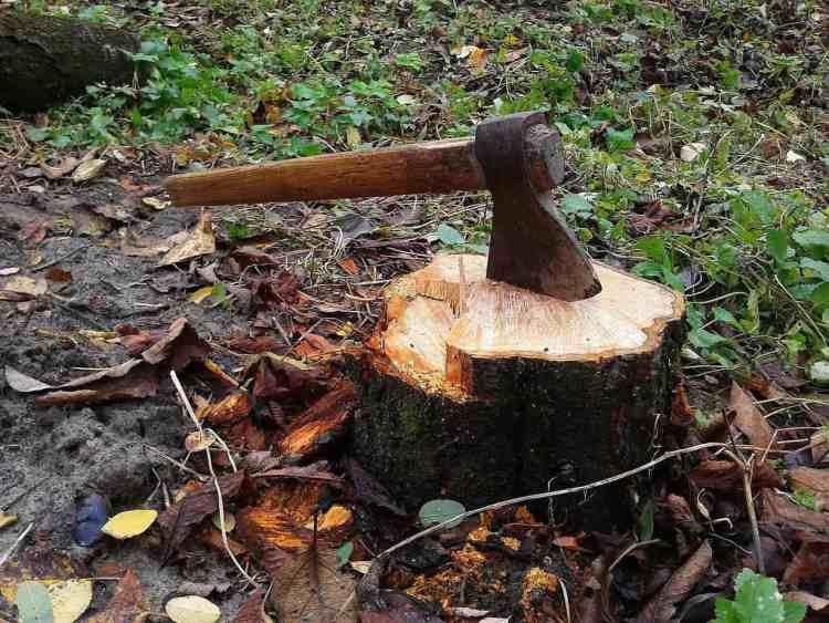 remove stumps