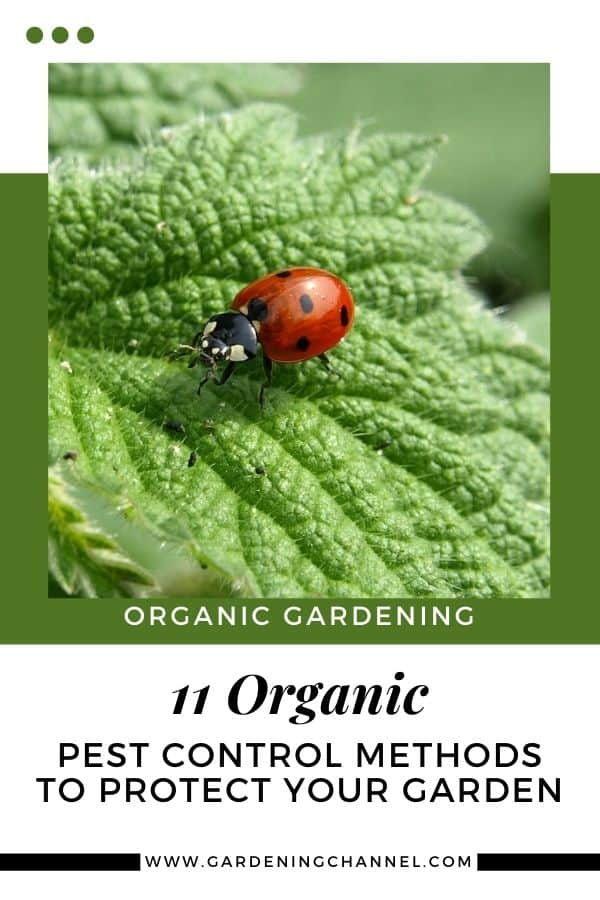 ladybug with text overlay organic gardening eleven organic pest control methods to protect your garden