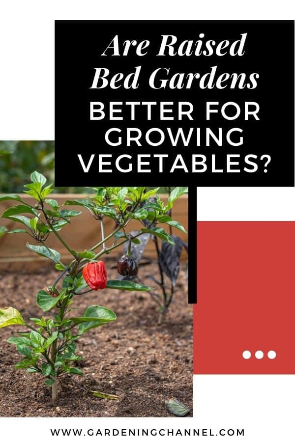peppers in raised bed with text overlay are raised bed gardens better for growing vegetables