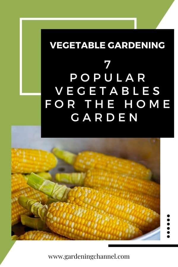 corn in steamer with text overlay vegetable gardening seven popular vegetables for the home garden