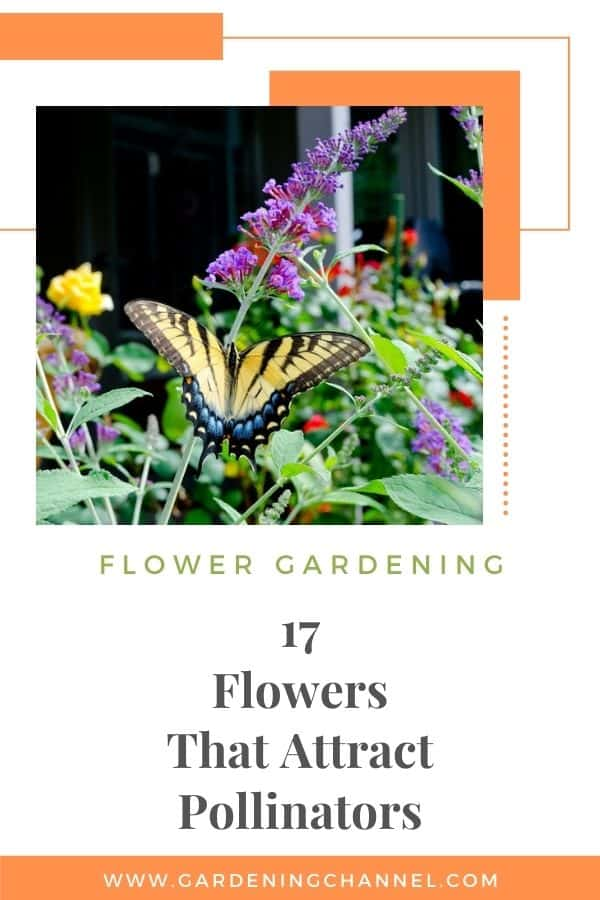 flowers in garden with butterfly with text overlay flower gardening seventeen flowers that attract pollinators