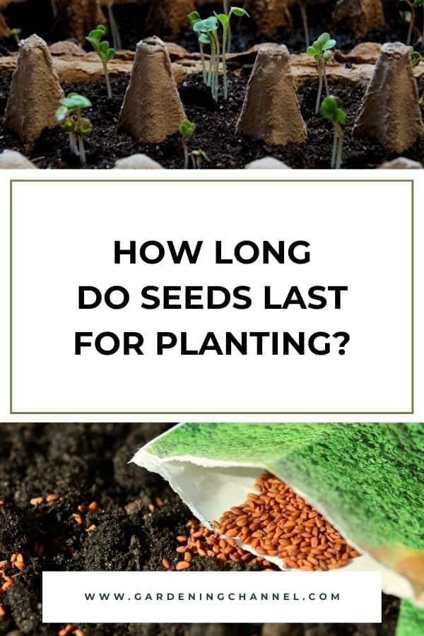 seeds sprouted in egg carton and seeds in packet with text overlay how long do seeds last for planting